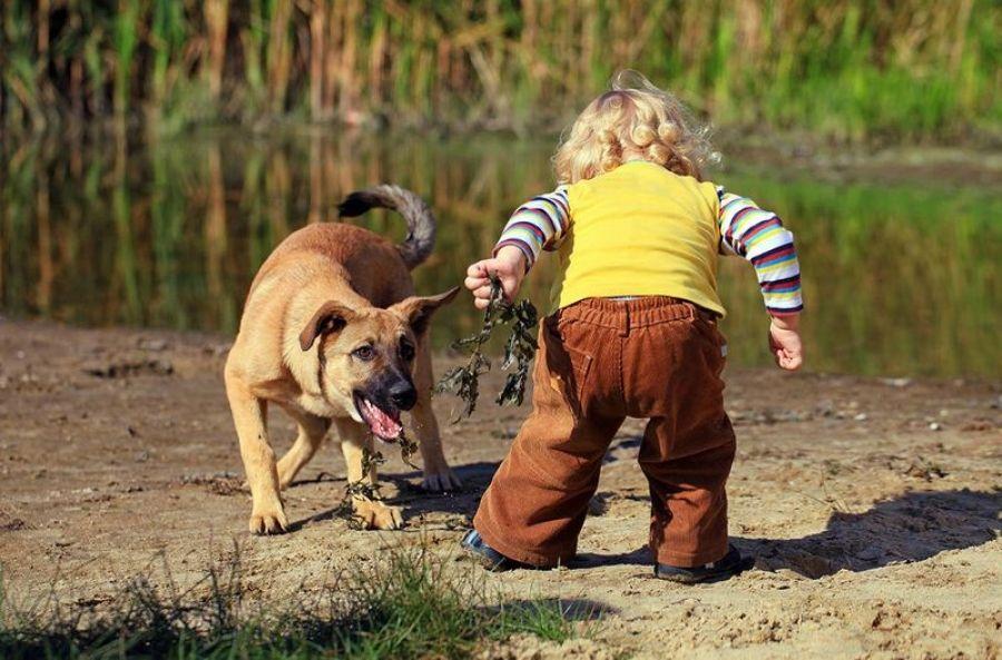 Что делать, чтобы избежать нападения и укуса собаки