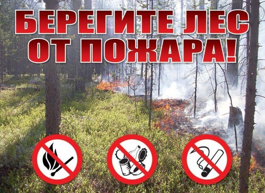 На территории области вновь введен режим ограничения пребывания граждан в лесах
