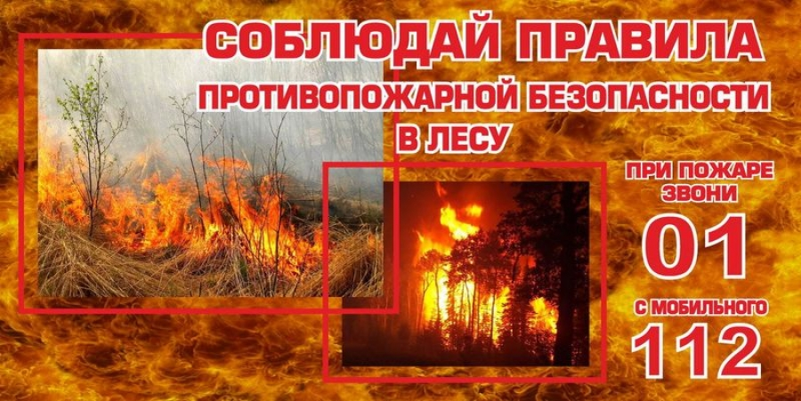 Правила пожарной безопасности при нахождении в лесных массивах