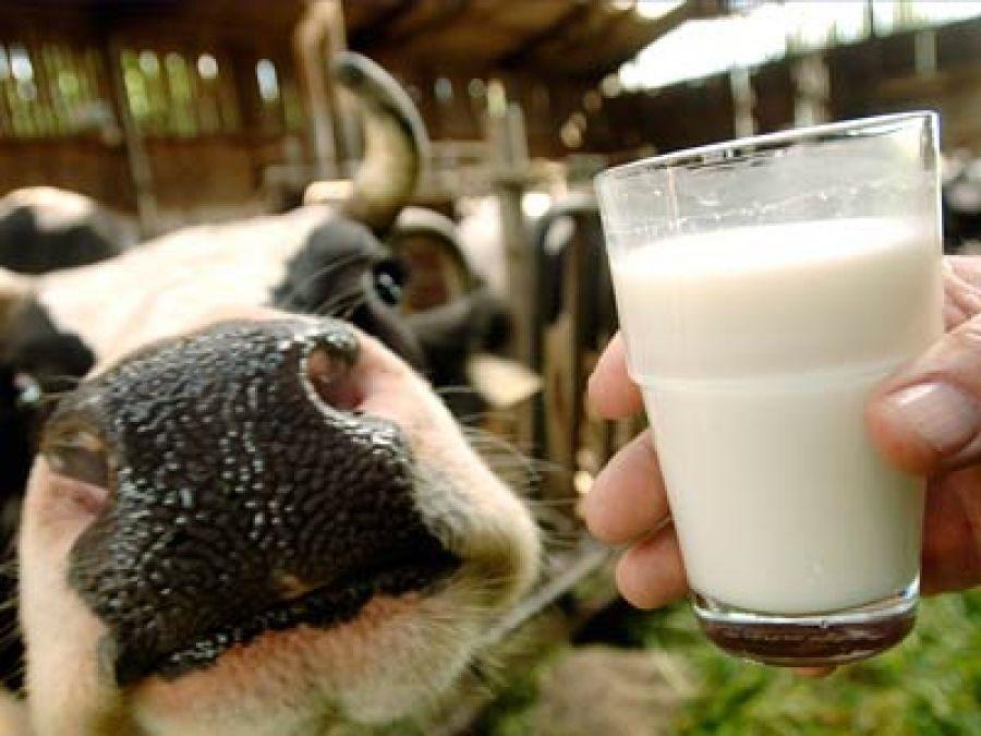 Развитие молочного скотоводства в Саратовской области