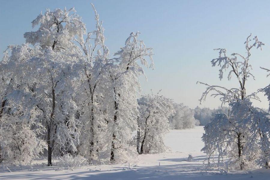 Оперативный прогноз погоды на 16 января 2021 года