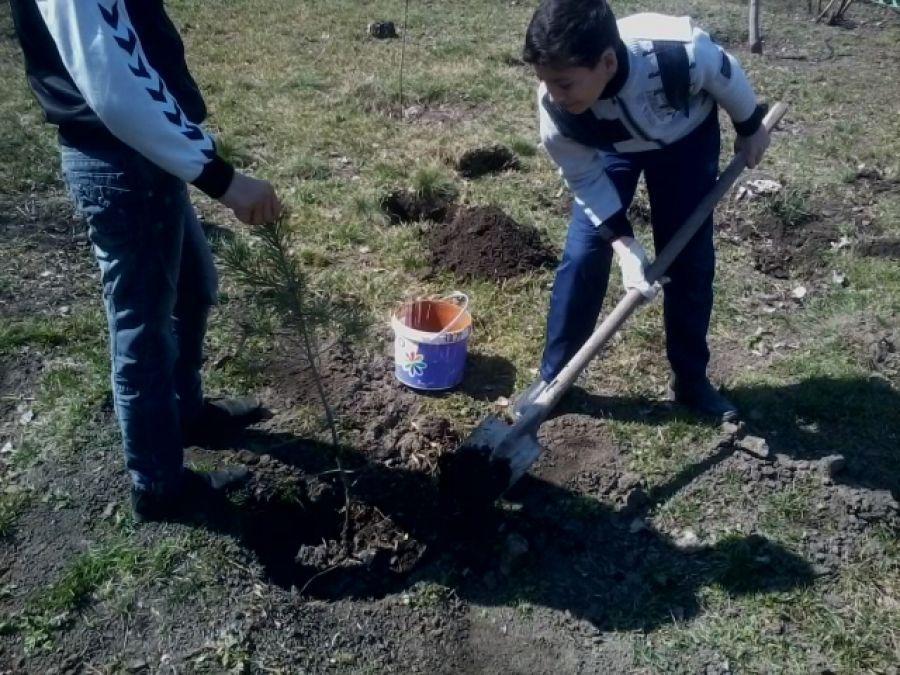 """""""Посади дерево"""""""