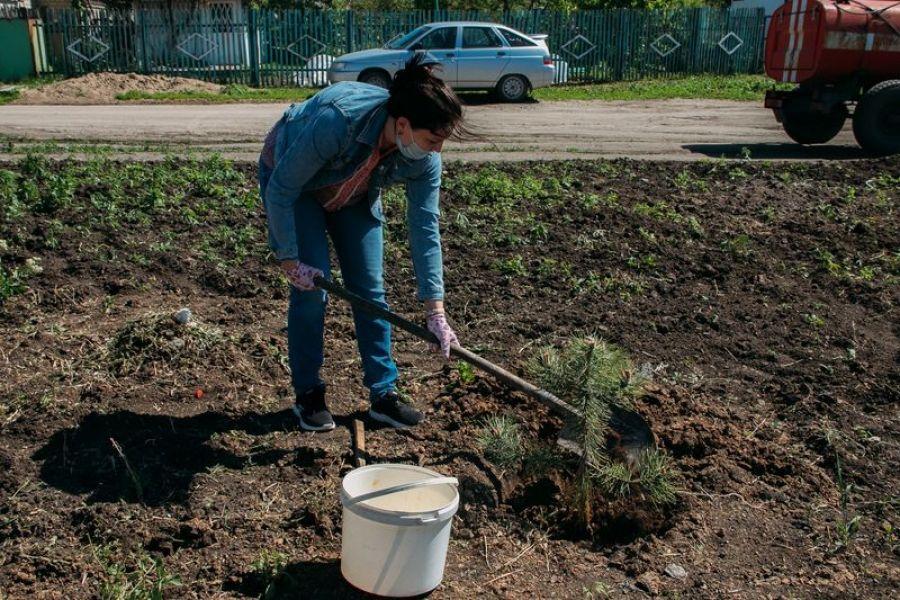 Татищевский район активно участвует в акции «Сад памяти»