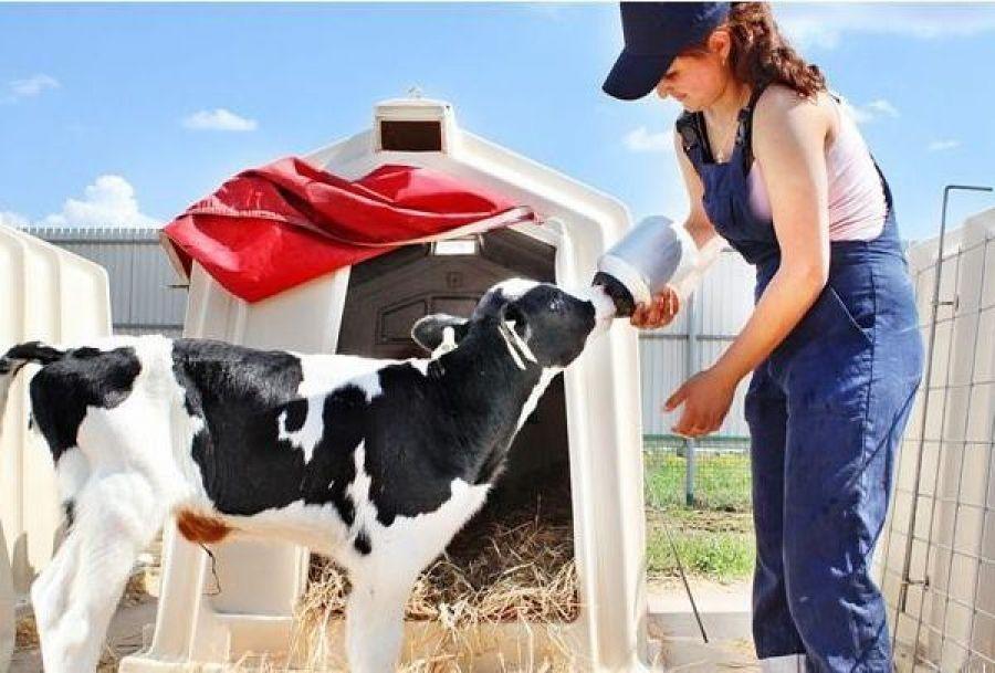 Поддержка начинающих фермеров и семейных животноводческих ферм