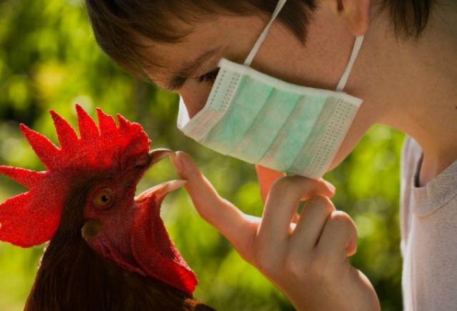 О гриппе птиц