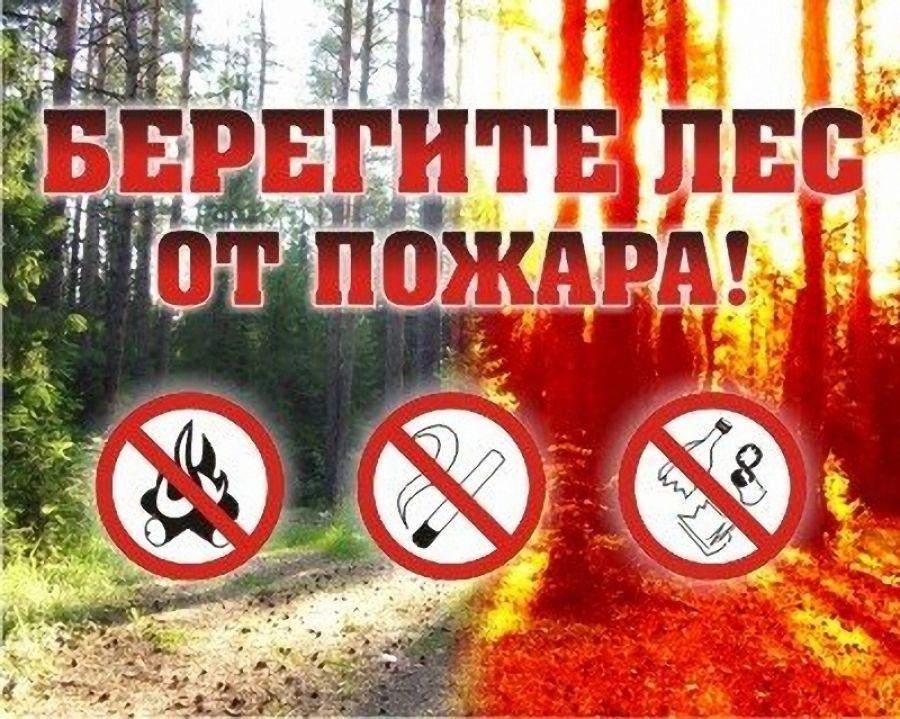 О мерах профилактики лесных пожаров