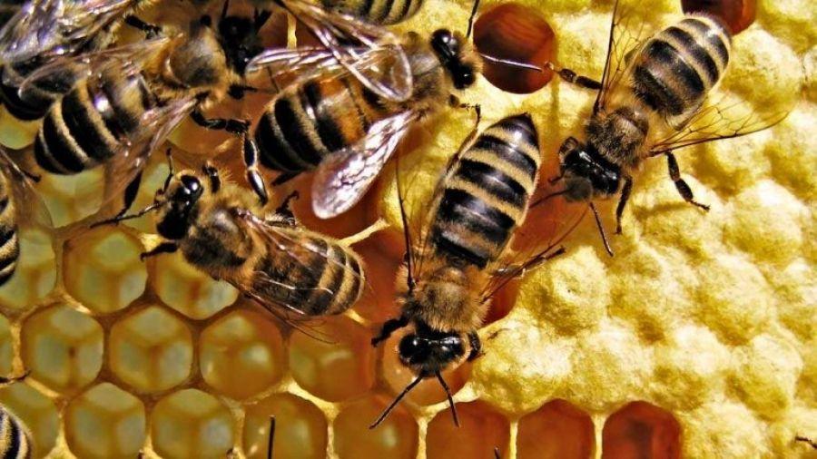 Инновационные приёмы и методы в пчеловодстве