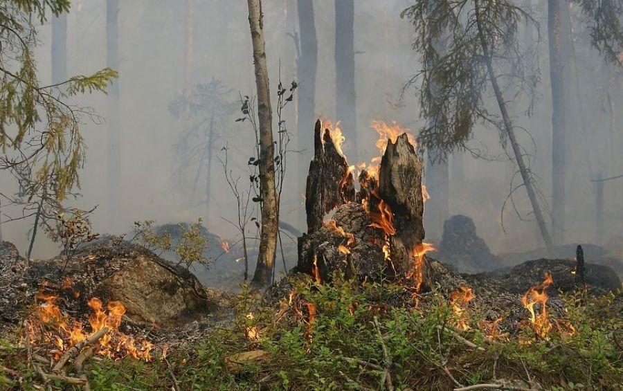 Меры безопасности и правила поведения в лесу