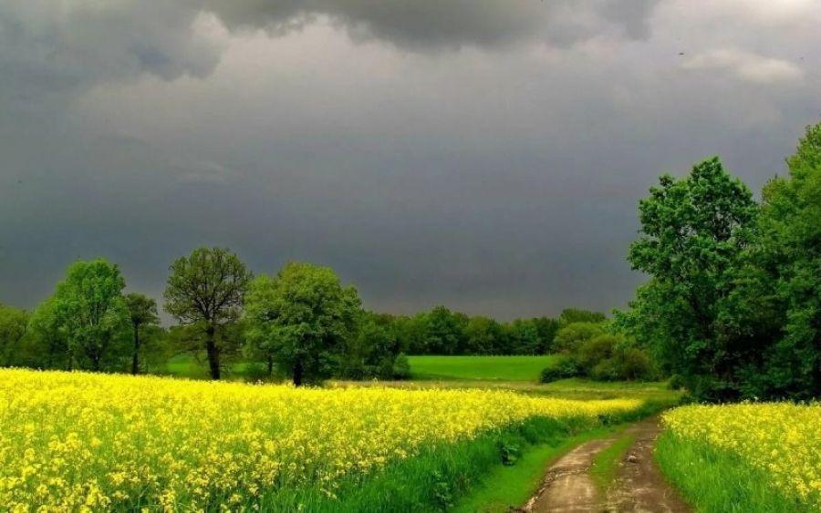 Оперативный прогноз погоды на 6 июня 2020 года