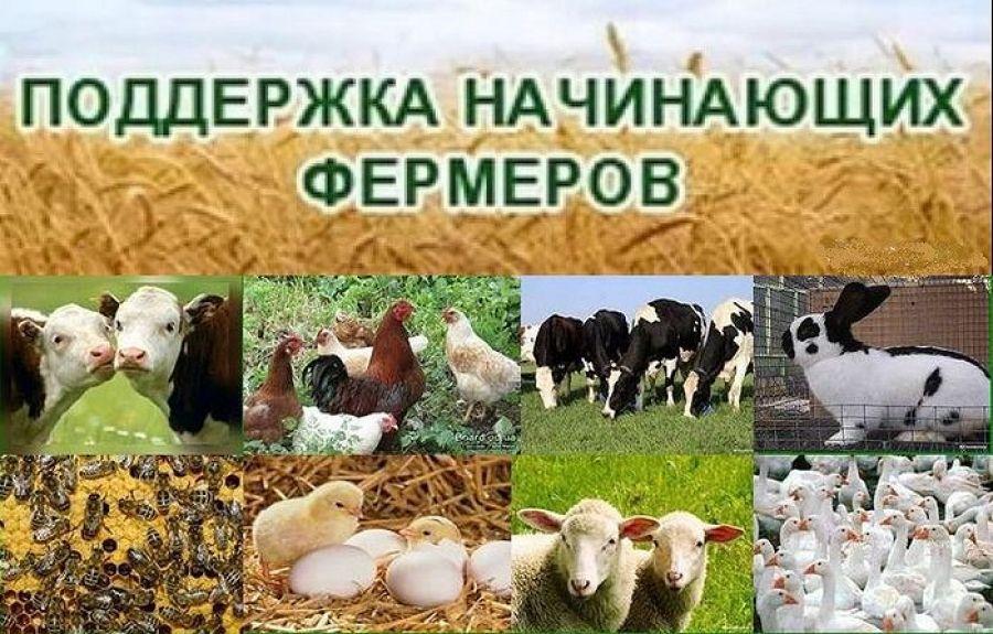 Программа поддержки начинающих фермеров