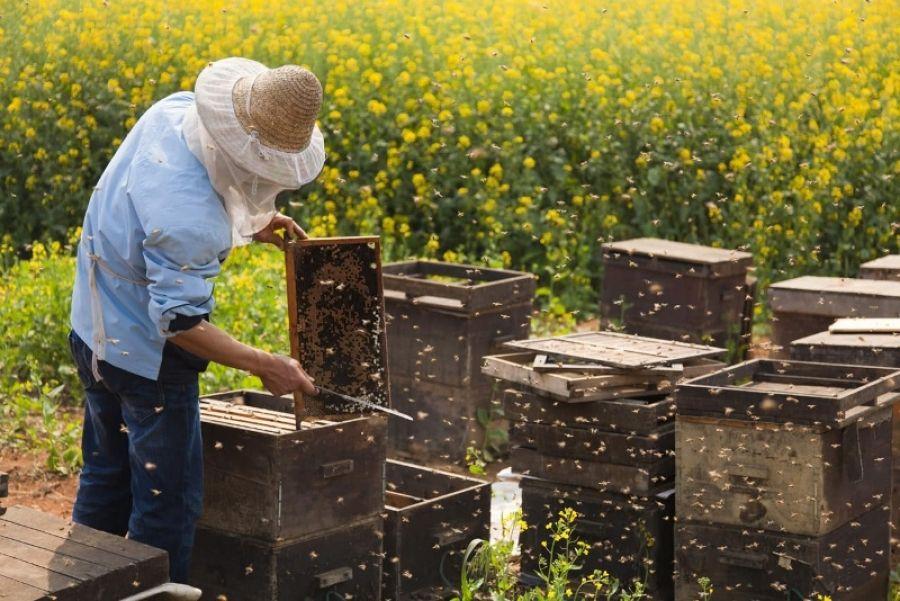 Об организации обмена информацией между пчеловодами и сельскохозяйственными товаропроизводителями