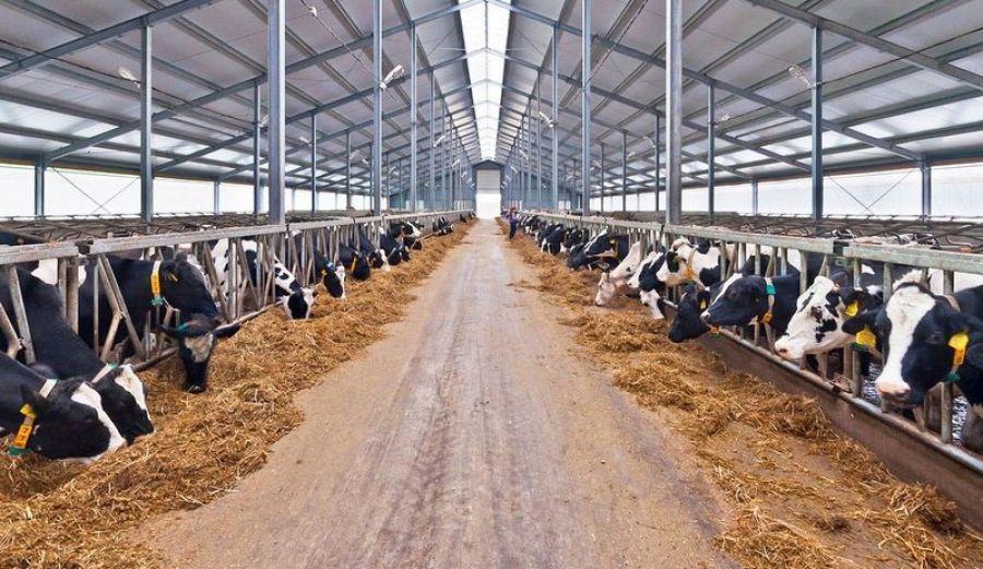 Возмещение части затрат на повышение продуктивности в молочном скотоводстве