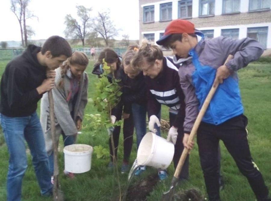 Мы создадим цветущий сад