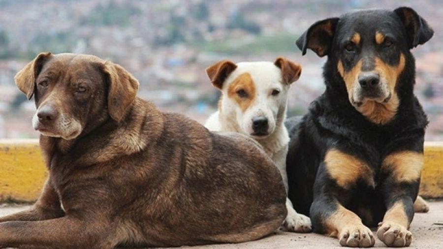 Отлов безнадзорных животных