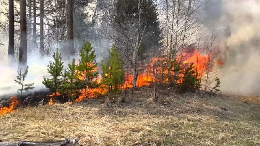 Крупный пожар в Татищевском районе