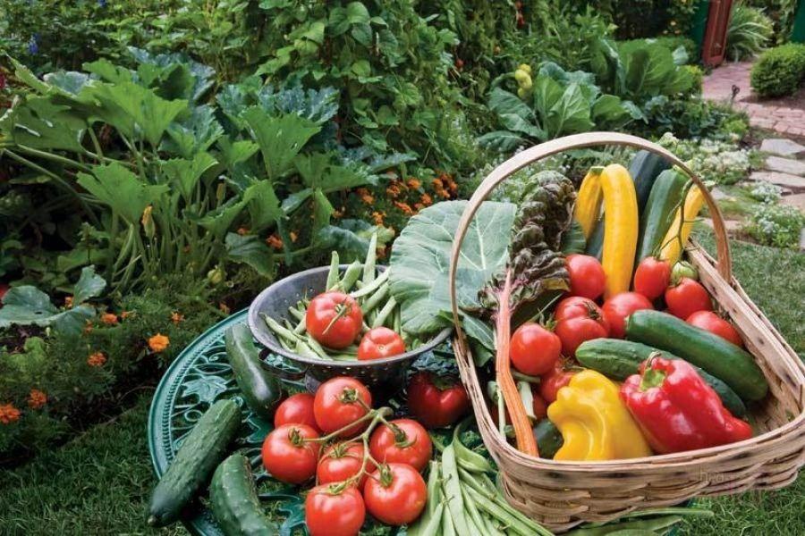 Садоводам и огородникам района предоставят торговые места